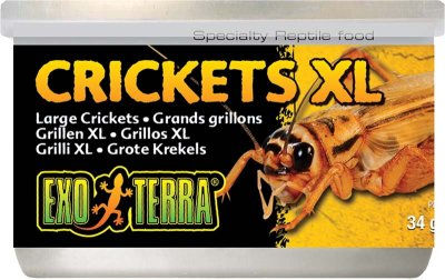 Exoterra Crickets XL 34g