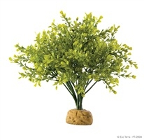 Exoterra Boxwood Bush